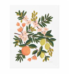 [Rifle Paper Co.] Citrus Floral 8 x 10